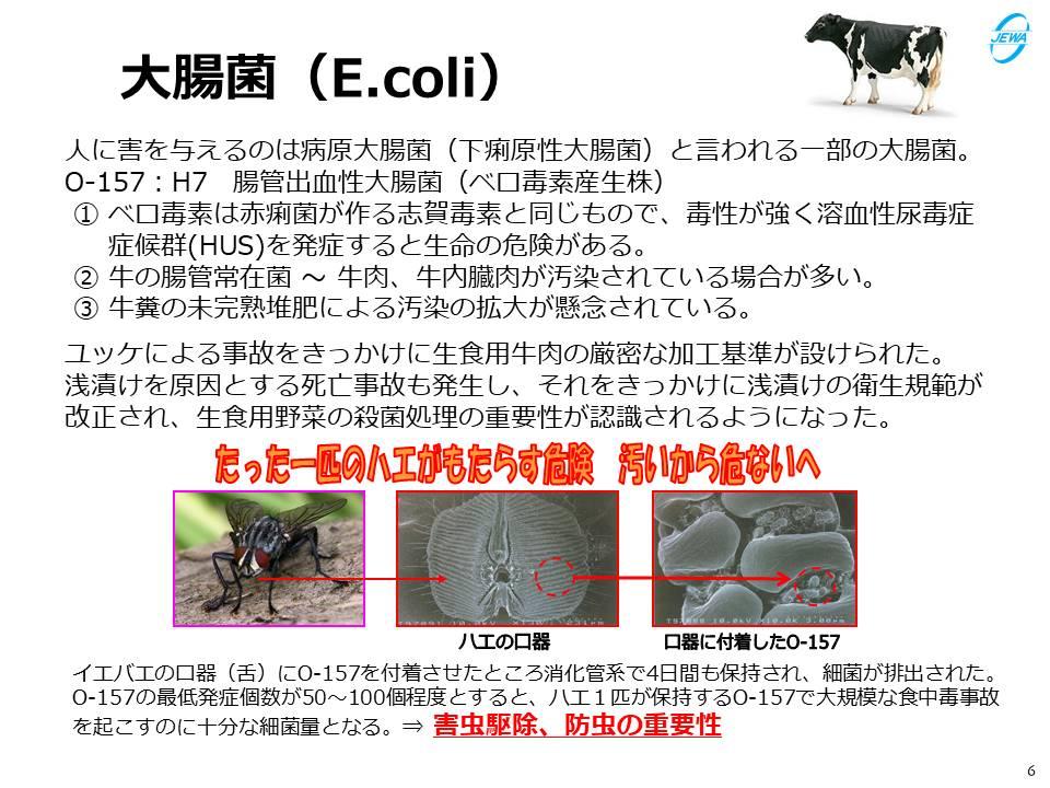 大腸菌(E.coli)